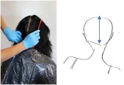 Starting at the hairline take a centre vertical parting to the nape