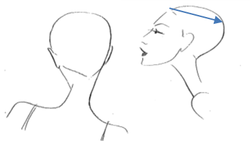Continue horizontally from the crown to the ear on each side of the head.