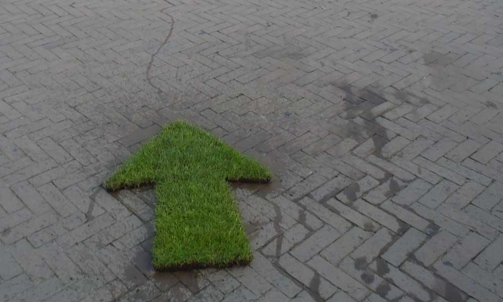 GRASS_Aventus.jpg