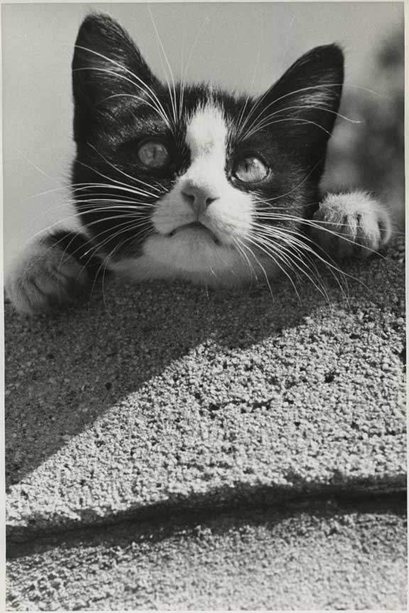 """Kitten, HD C-Print, 24"""" x 19.28"""