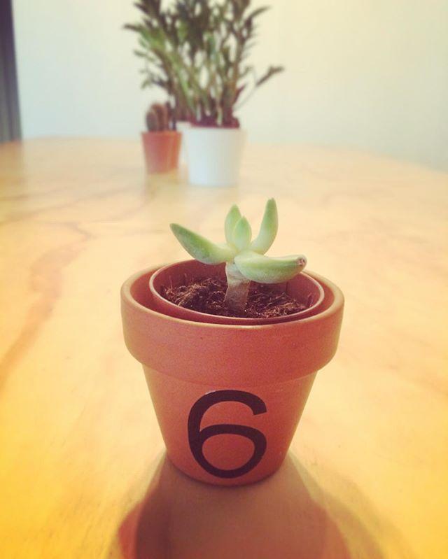 #succulents 🌵