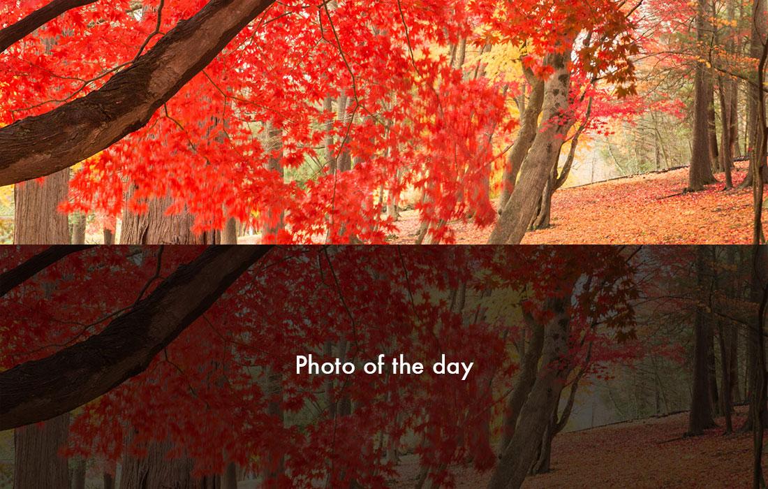 Photo_Sprite.jpg