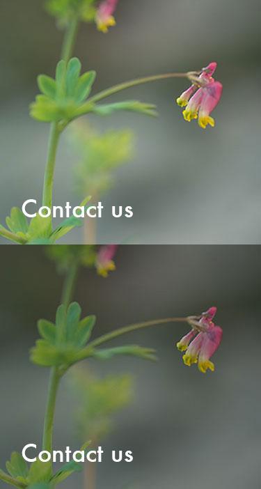 Contact_Sprite.jpg