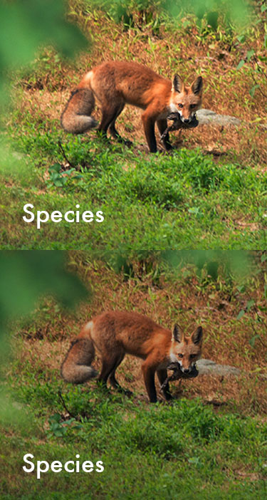 Species_Sprite.jpg
