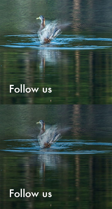 Follow_Sprite.jpg