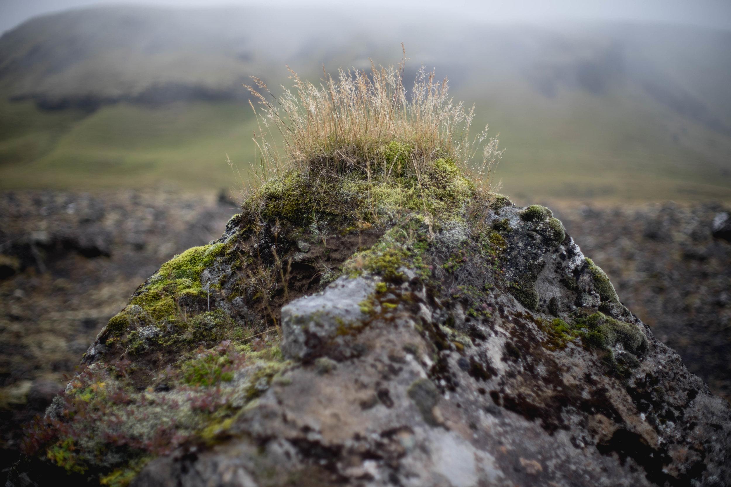 Iceland - 00071 - Chris Goetchius 2017.jpg