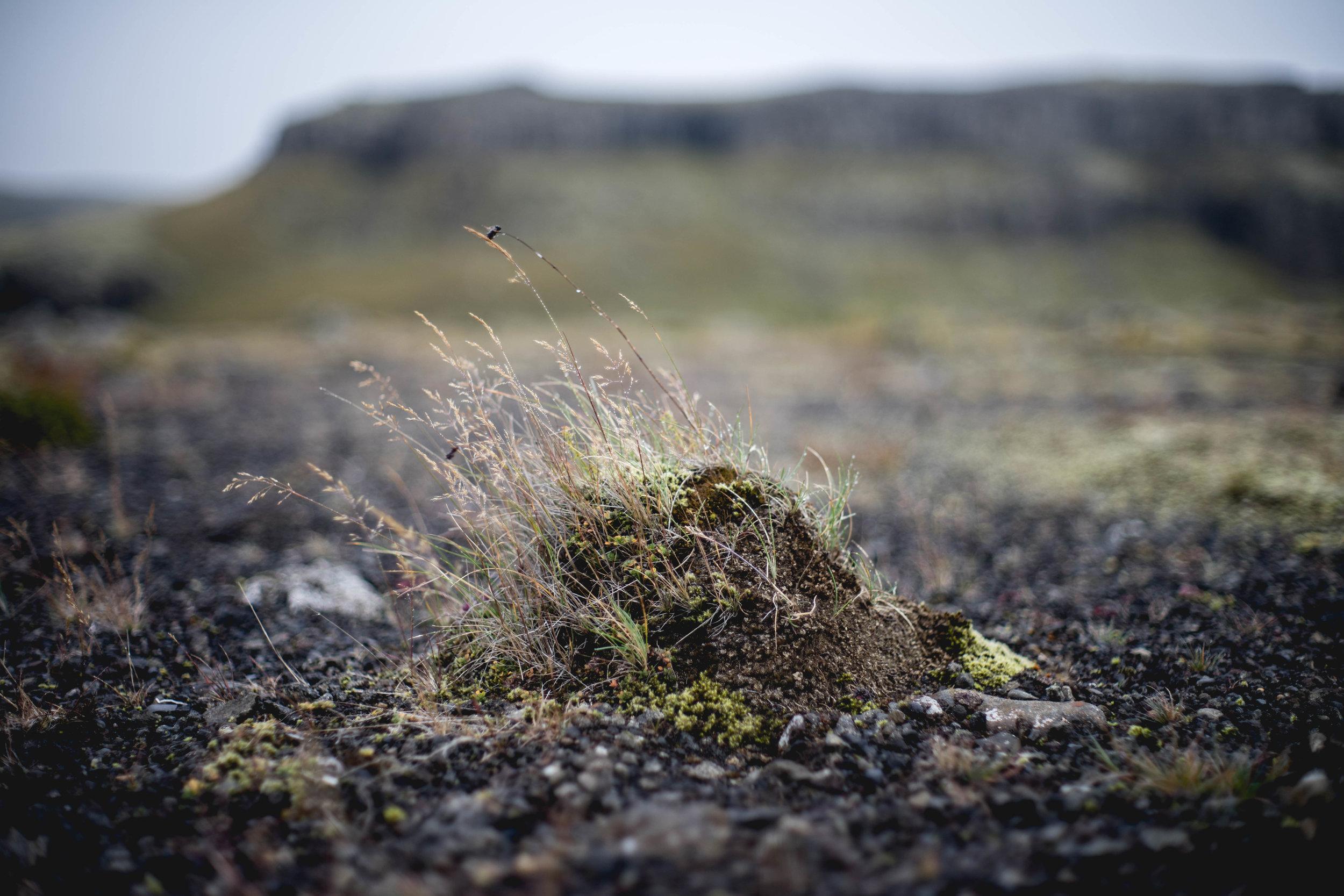 Iceland - 00073 - Chris Goetchius 2017.jpg
