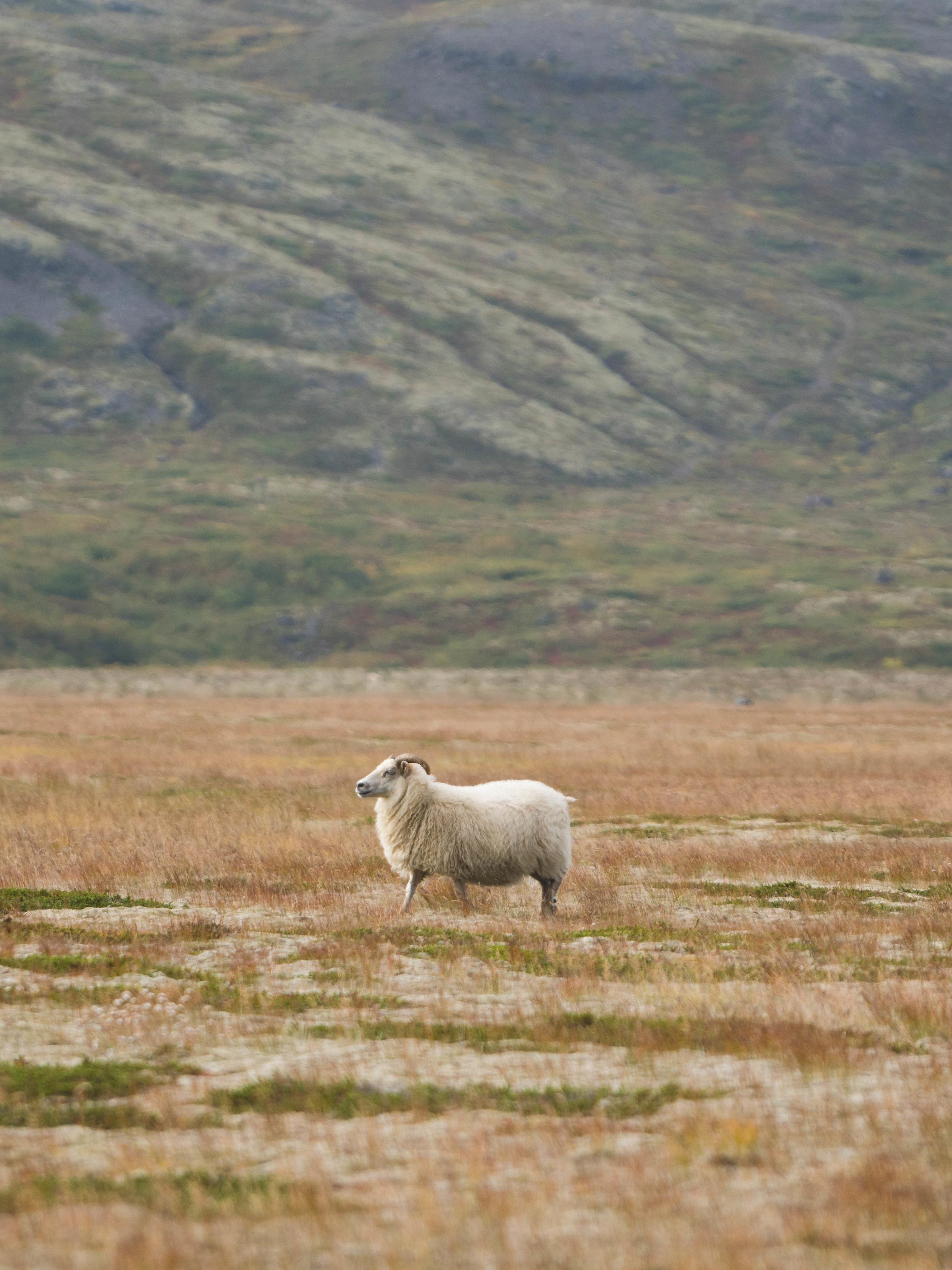 Iceland - 01286 - Chris Goetchius 2017.jpg