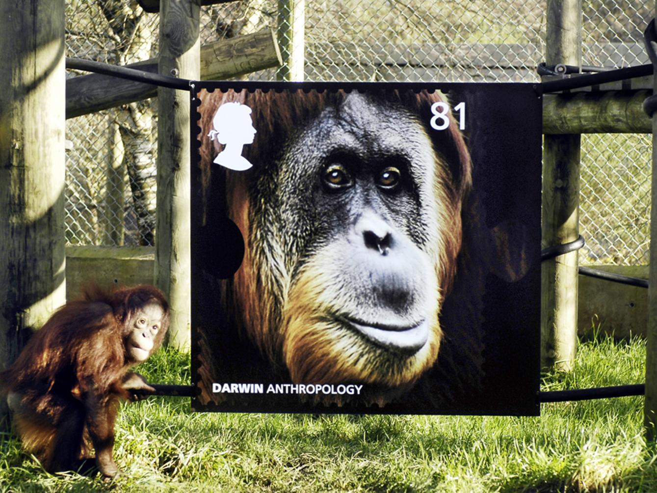Darwin Monkey World 01.jpg
