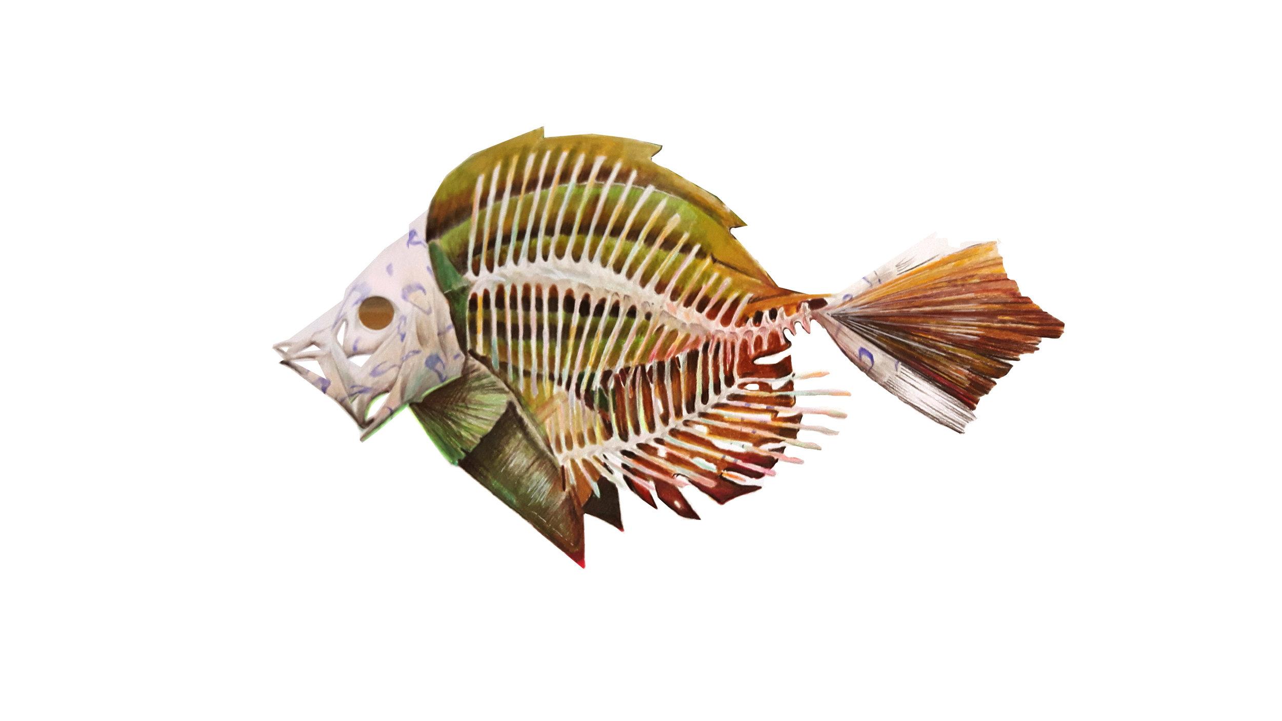 flatfish1.jpg