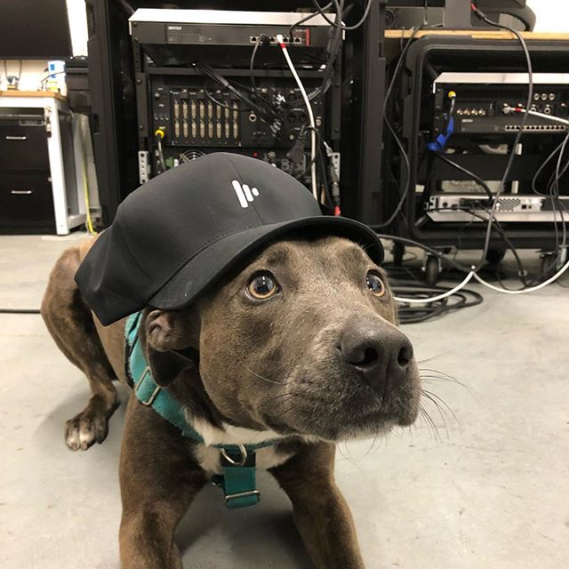 In honor of #nationalpuppyday🐶 we'd like to introduce our newly trained @disguise_one programmer.  She's ready to hit it full force! . . . . #dogsofinstagram #dogs  #events #eventprofs #eventproduction #video @soarinpuppy