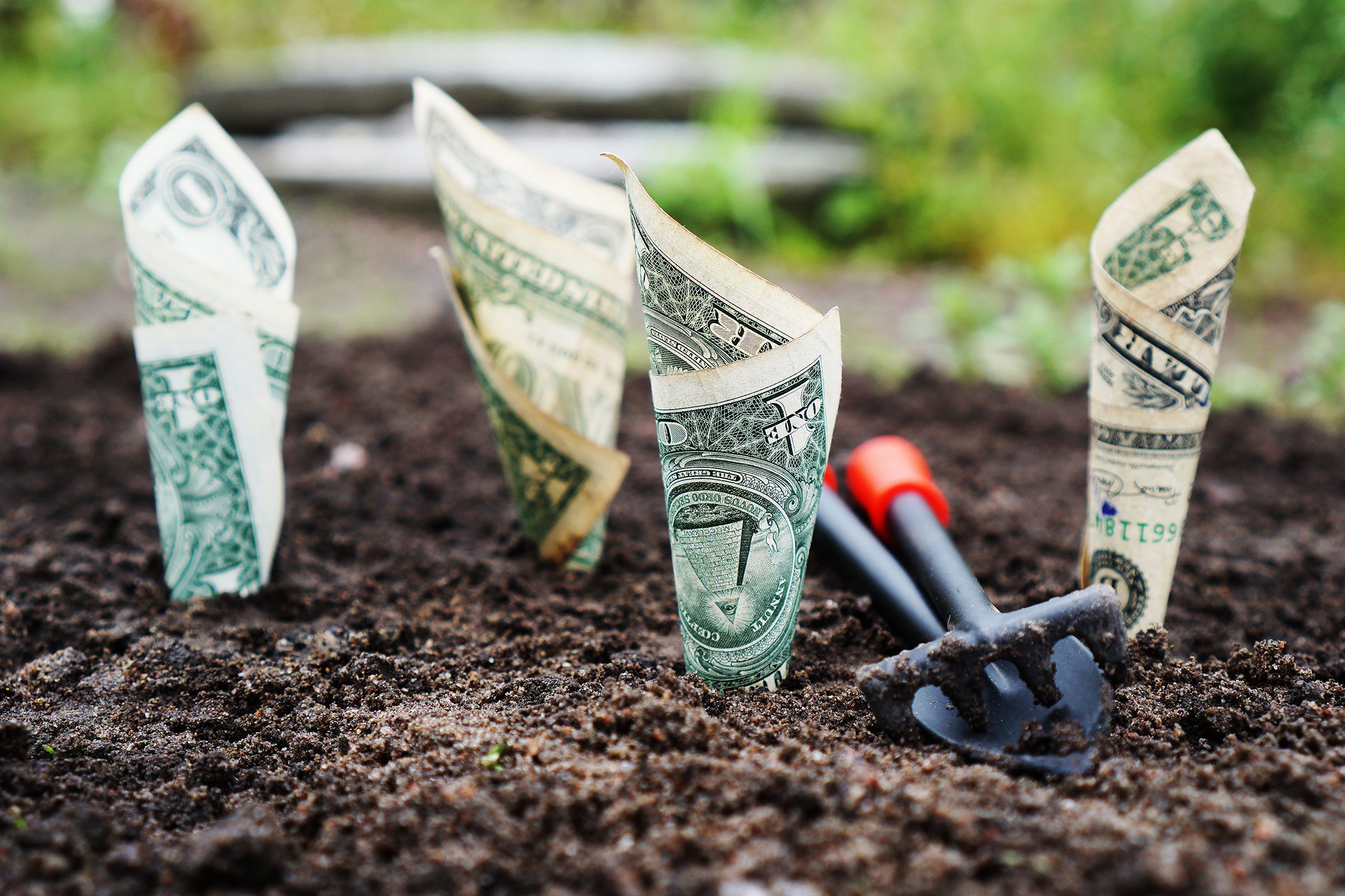 Dollars planted in dirt image