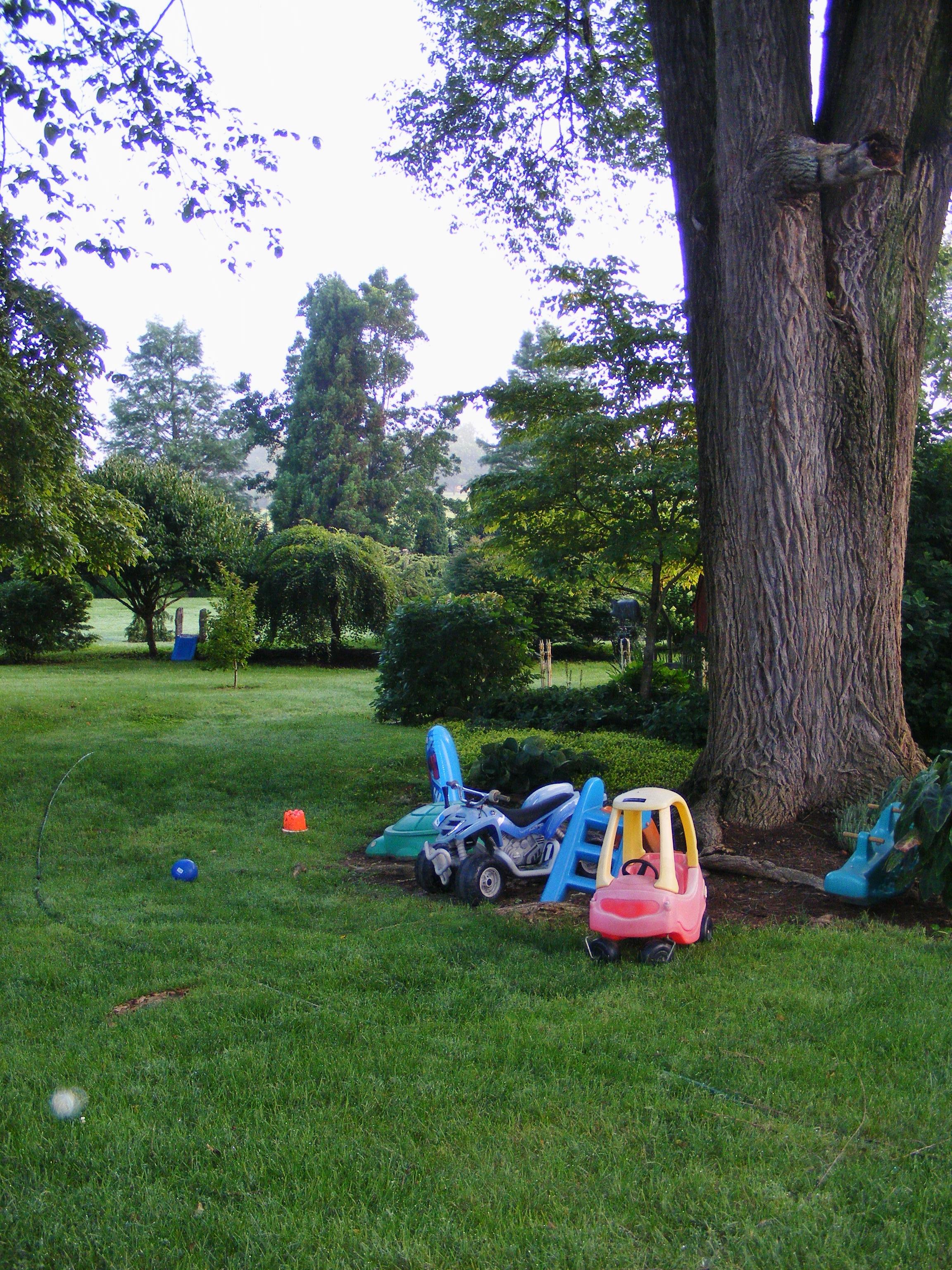 A 4-year-old boy's garden