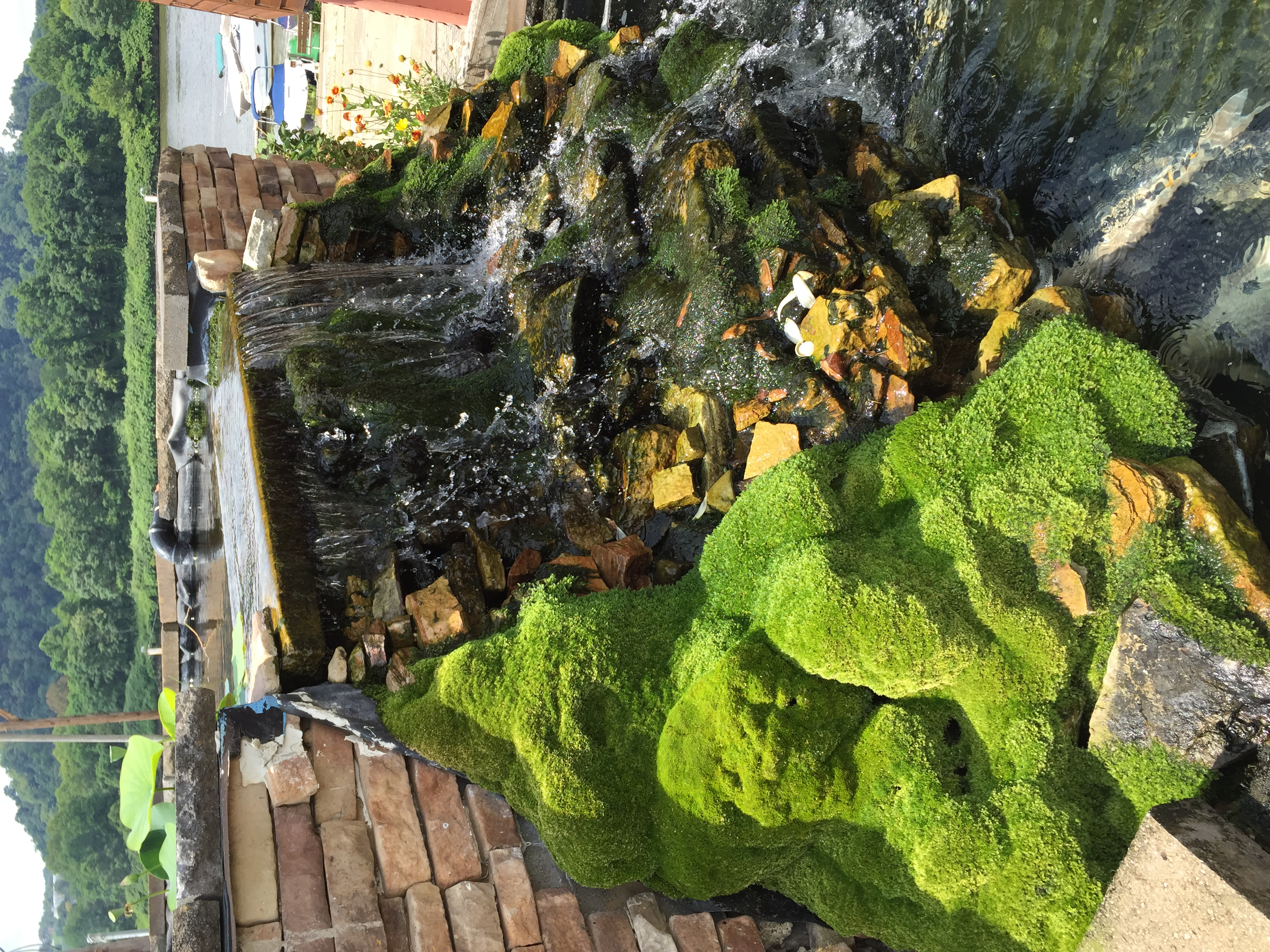 My favorite detail in this garden was a mossy outcropping on the edge of a small waterfall