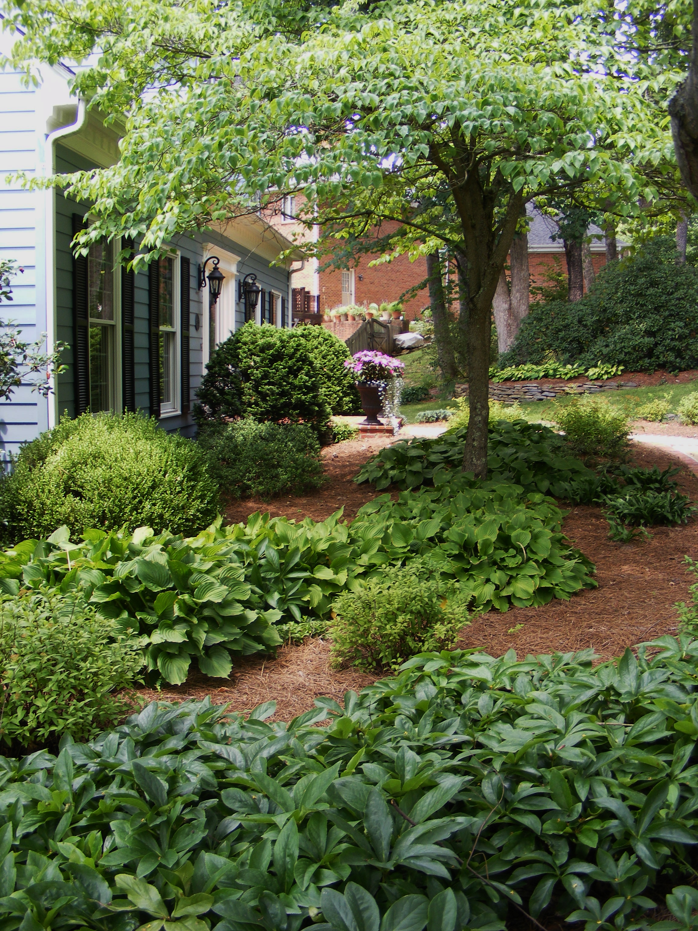 Hostas and hellebores
