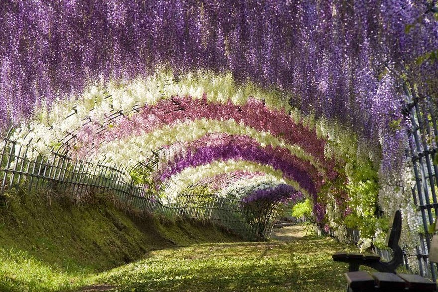 Seven magnificent tree tunnels....  HERE !