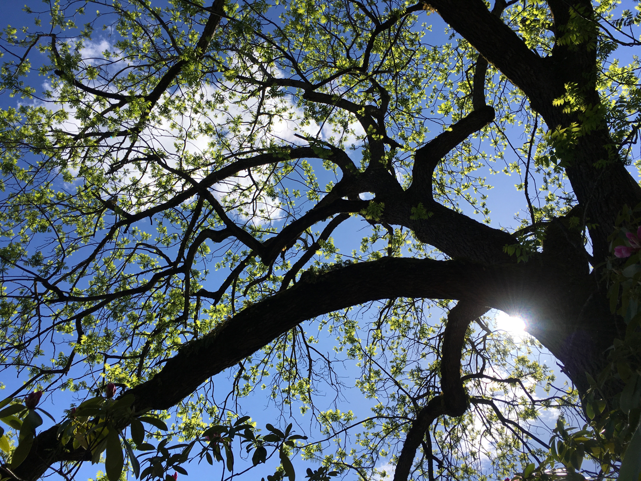 Looking at sky through tree branches
