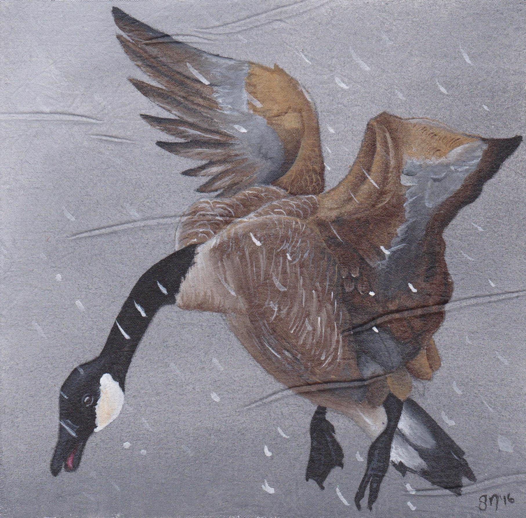 """Snow Goose"""" by Scott North; PA"""