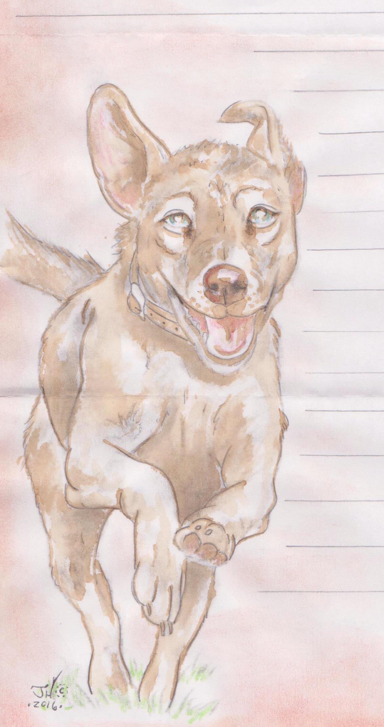Happy Dog art by Jeremy Hammill 001a.jpg