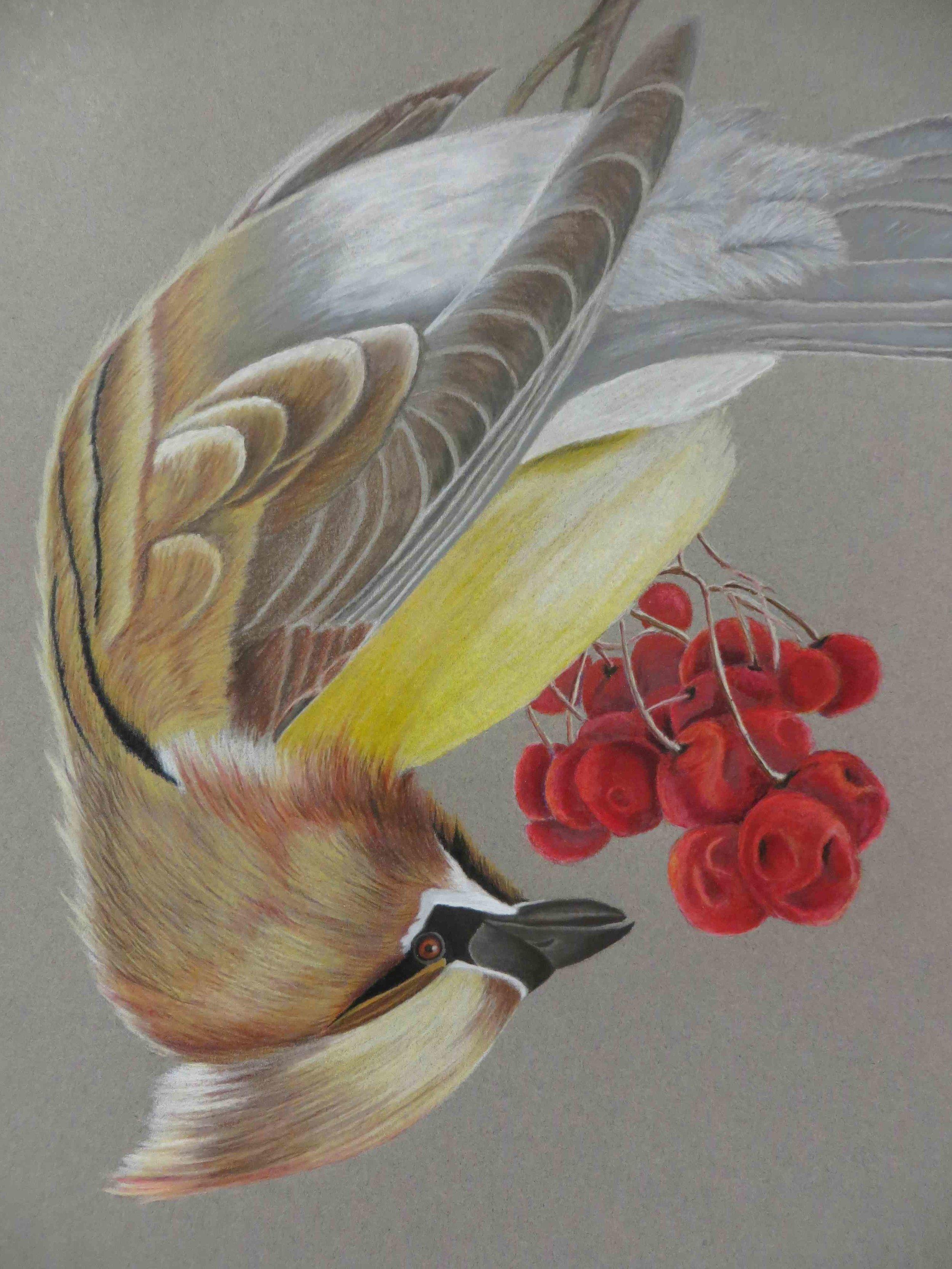 Cedar Waxwing Bird.jpg