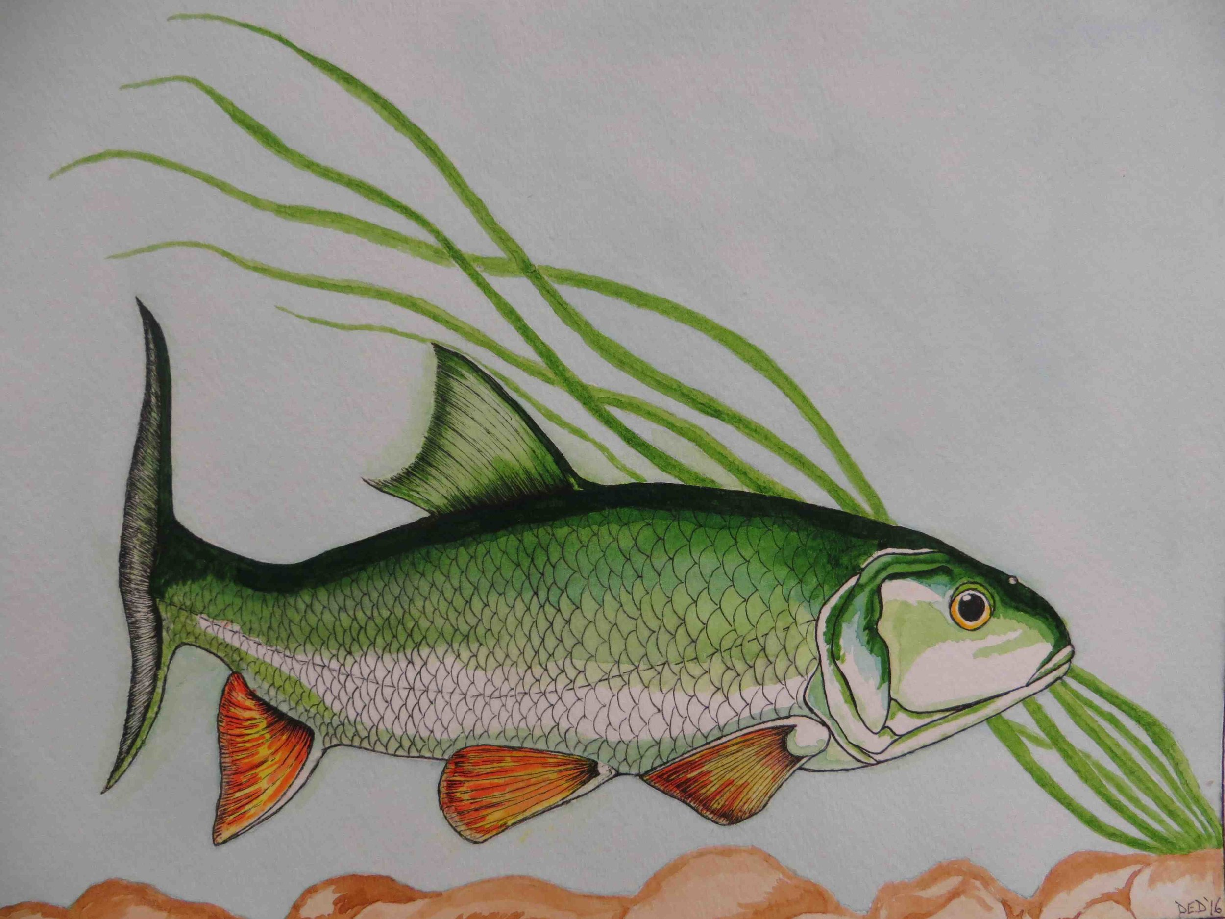 Fish art by Douglas Dworak San Quentin-002 - Copy.jpg