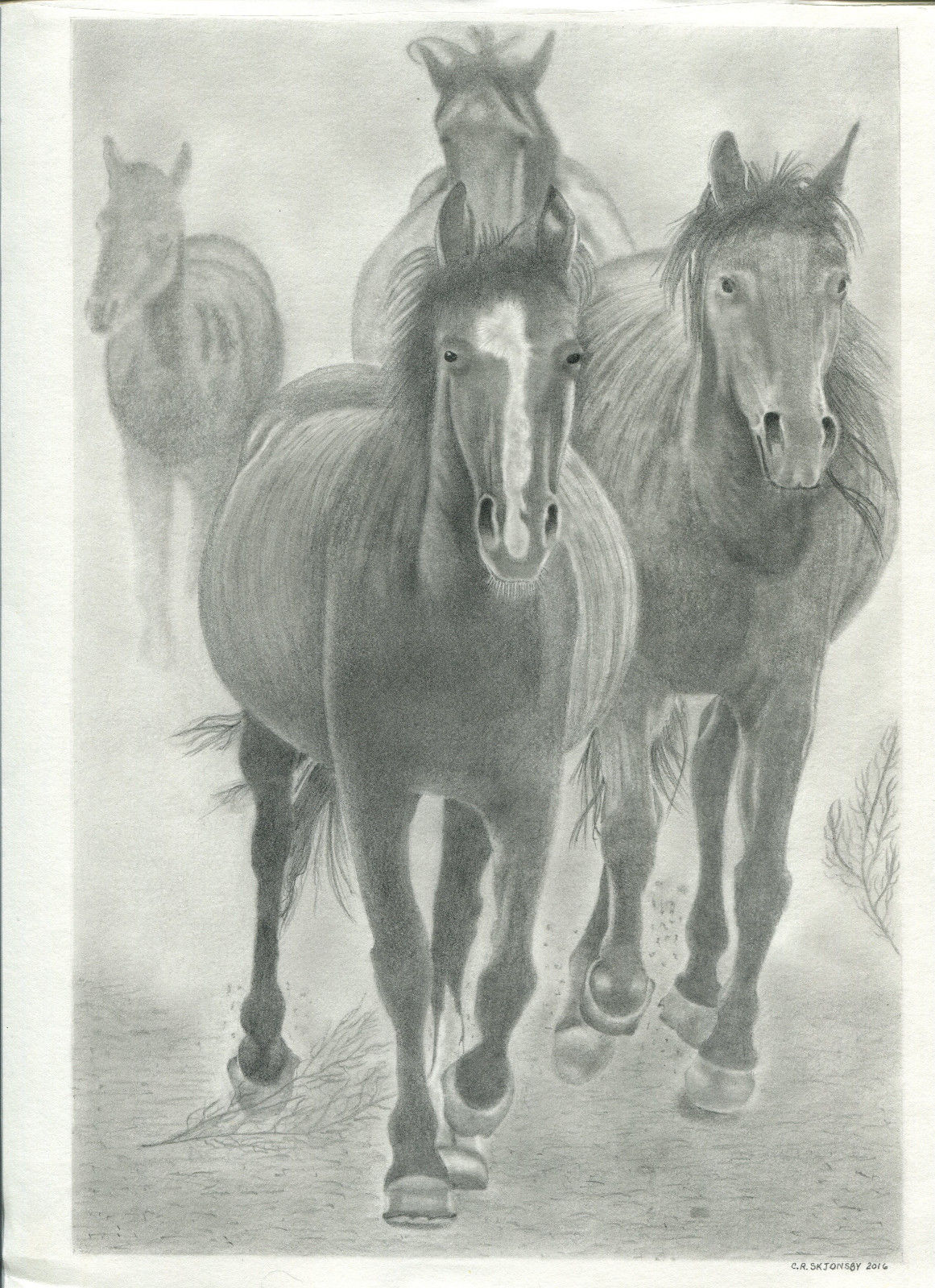 horses pencil drawing by Clare Skjonsby Oakdale, La..jpg