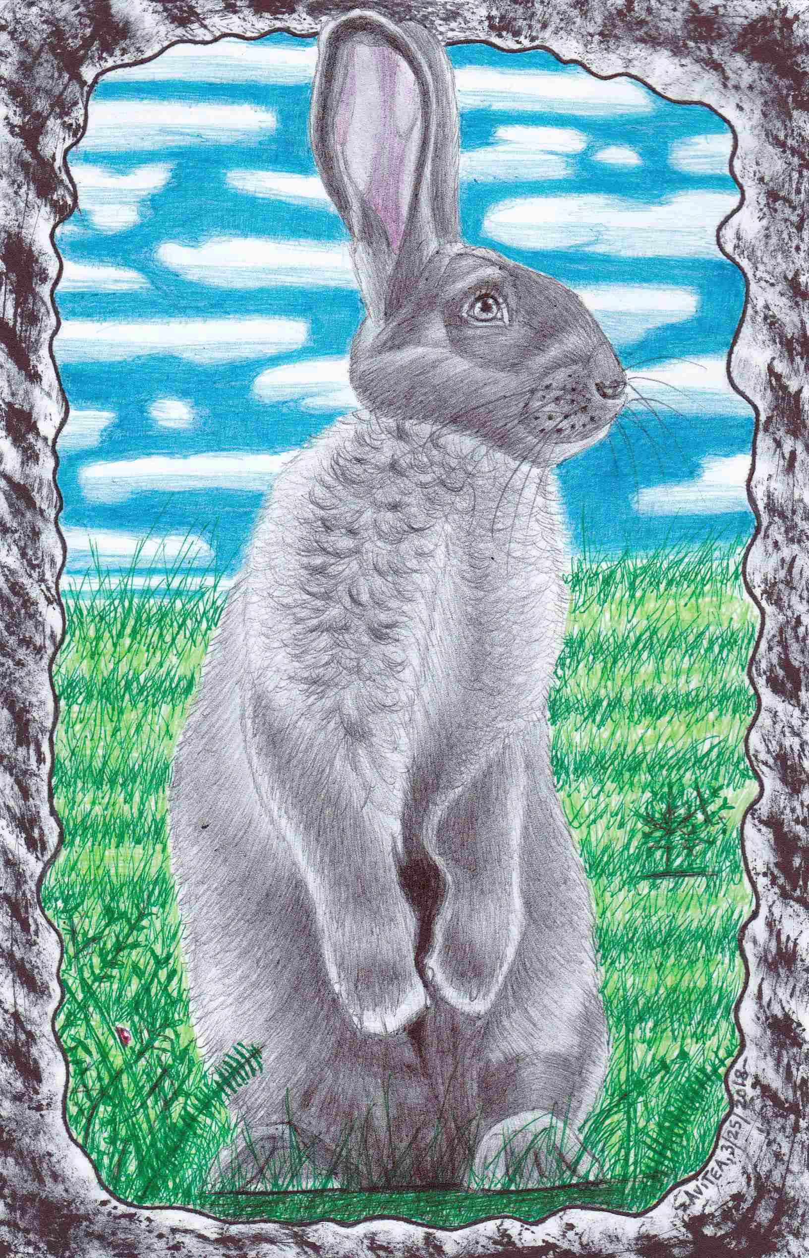 Silver Fox Hare drawing by Chris Avitea March 2018-IMG_20180329_0001 - Copy.jpg