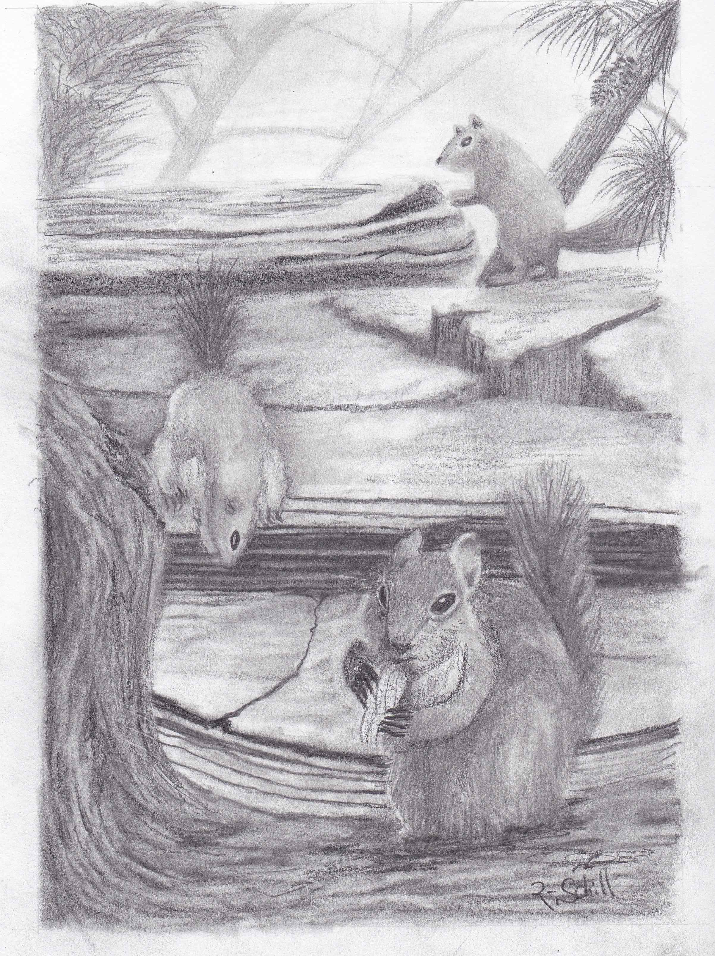 Squirrels pencil drawing by inmate artist Randy Schill Wisconsin-IMG_20170825_0003 - Copy.jpg