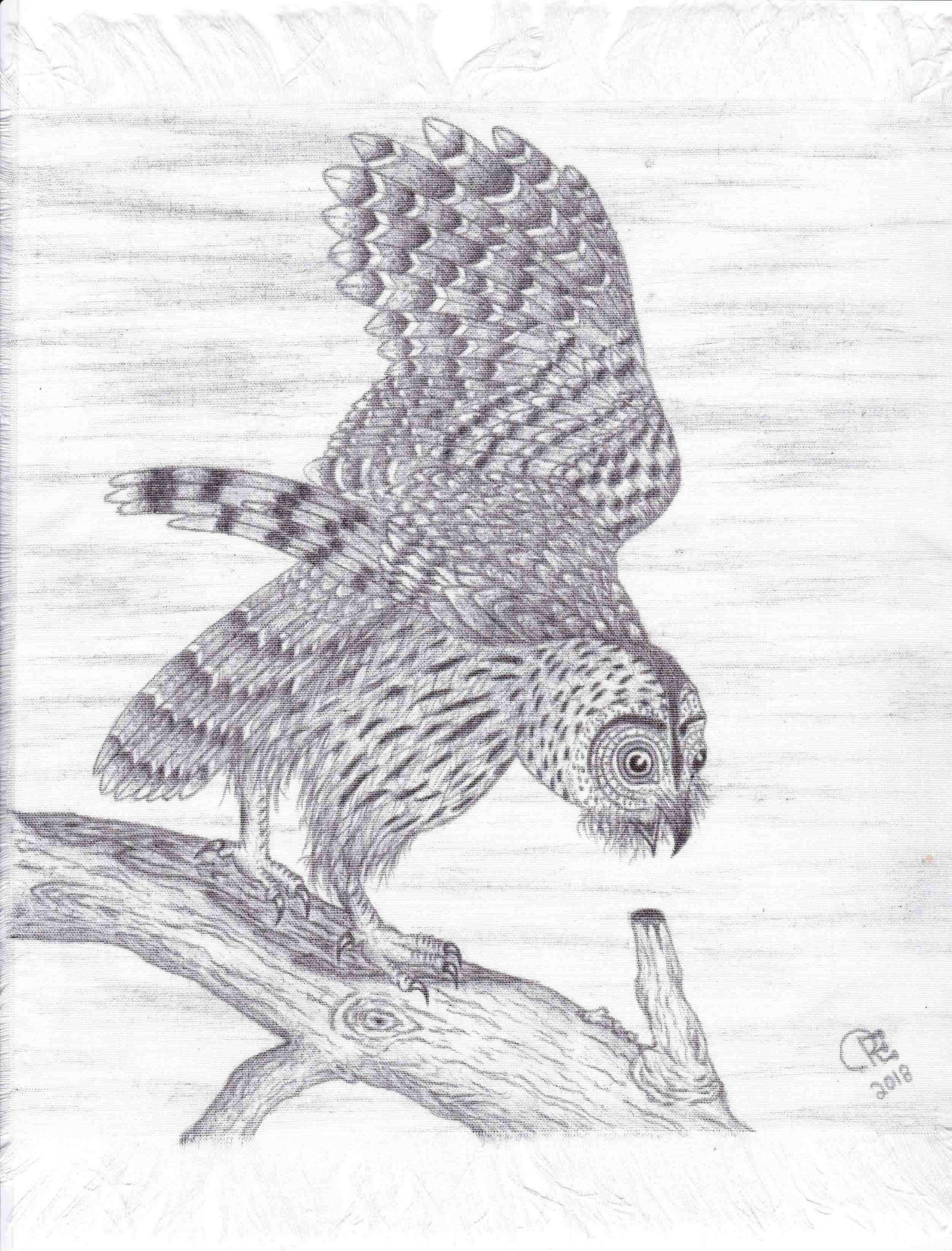 Owl by Roger Florida-Owl by Roger Florida-IMG_20181125_0001.jpg