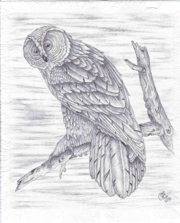Owl by Roger Florida-Owl by Roger Florida-IMG_20181125_0002.jpg