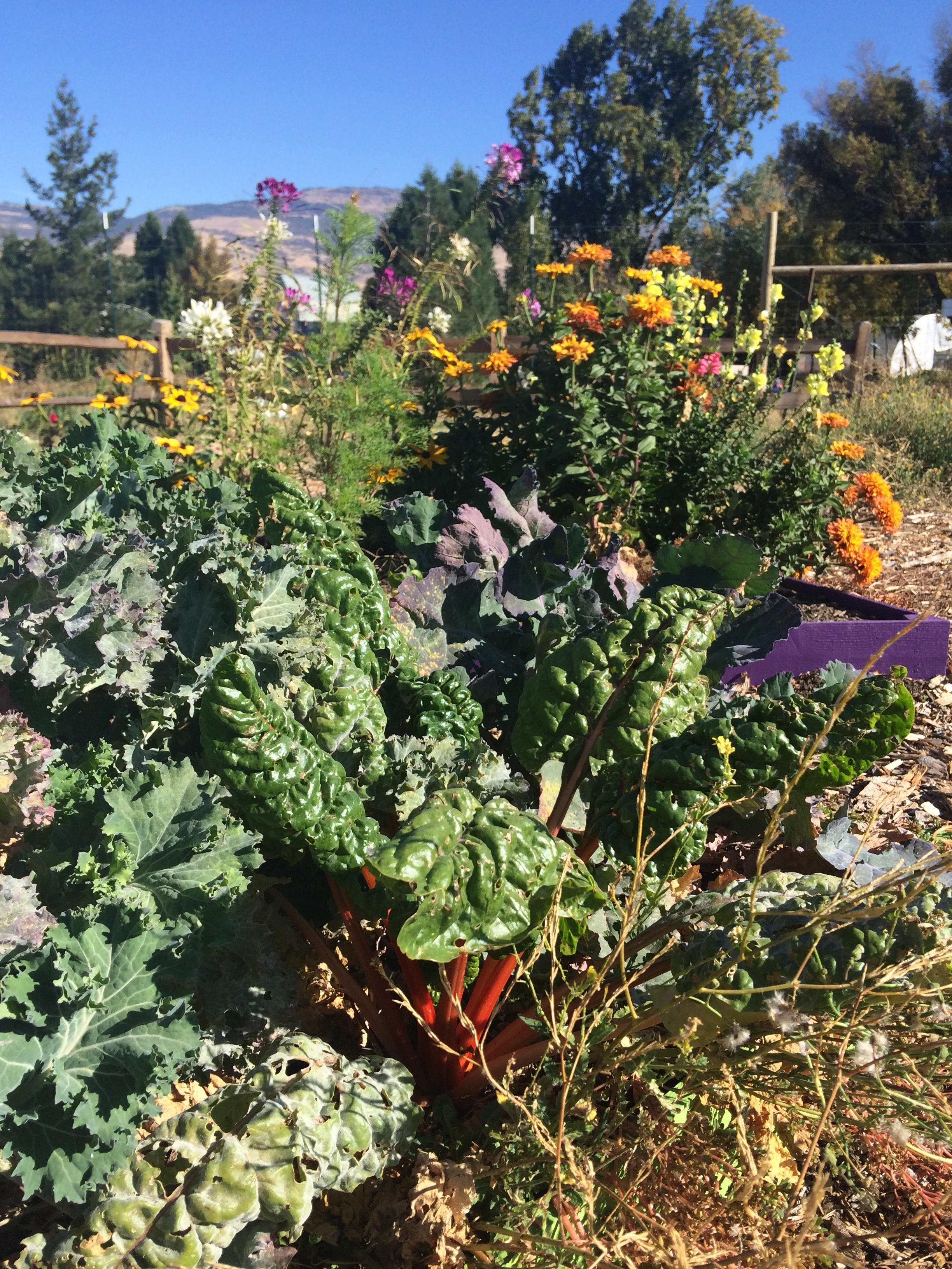 The farm has lots of fresh produce, ready to be chowed down on!
