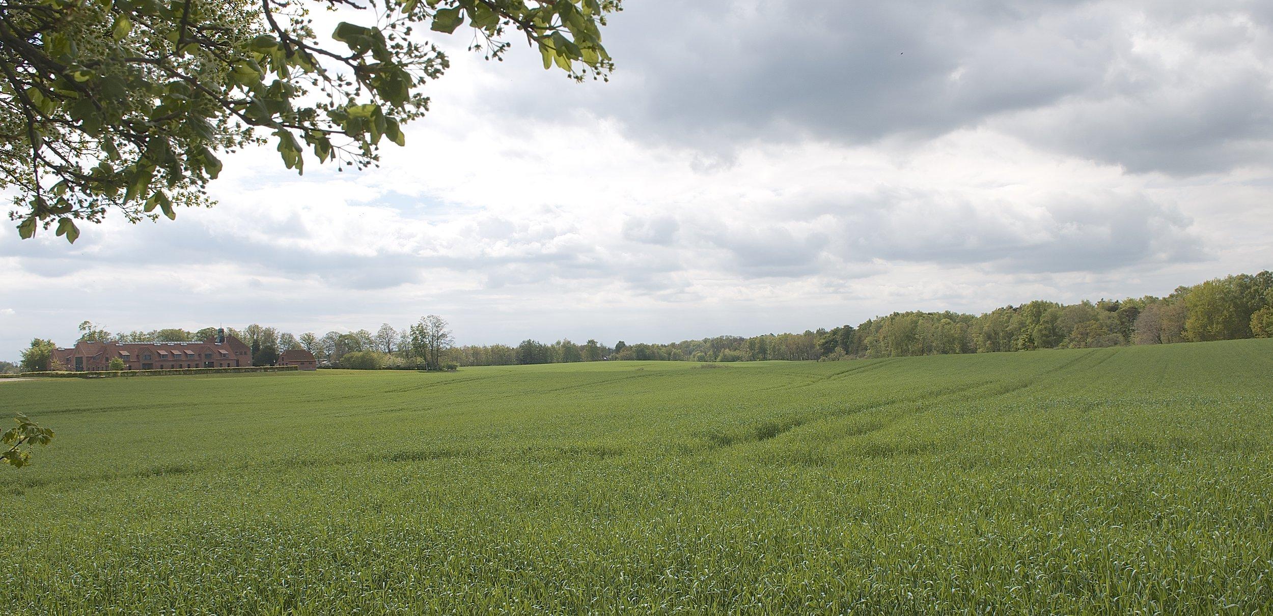 """I området i Blovstrød beliggende vest for Kongevejen mellem Ejnars Sti og Sortemosevej ligger et stort område, også kaldet 'Ny Allerødgårds jorder'.Jørgen Ekstrøm Jakobsen siger: """"En fin vision kunne være at skabe et halvåbent varieret naturlandskab. Det ville kunne trække natur og skov helt op til Blovstrød og dermed blive bynær natur."""" Foto: AOB"""