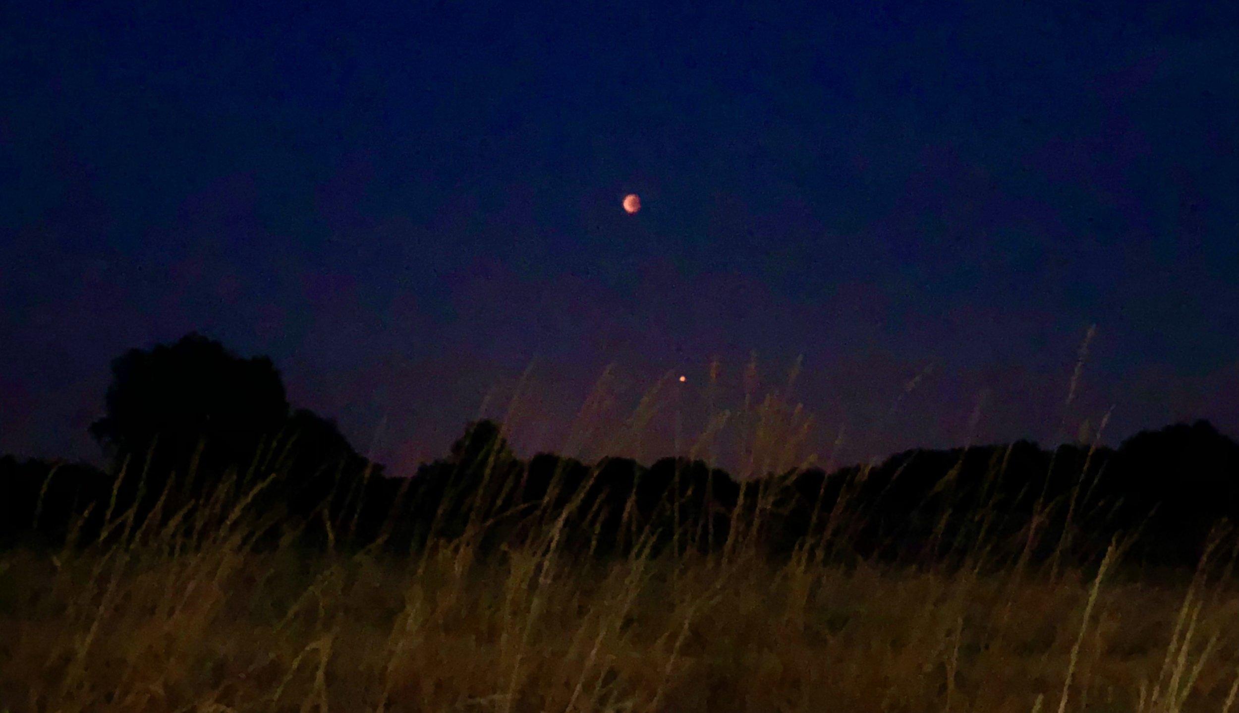 Vores fotograf var tålmodig og til sidst fik han et foto af både blodmånen og planeten Mars. Billedet er taget med en iPhone.Foto: AOB