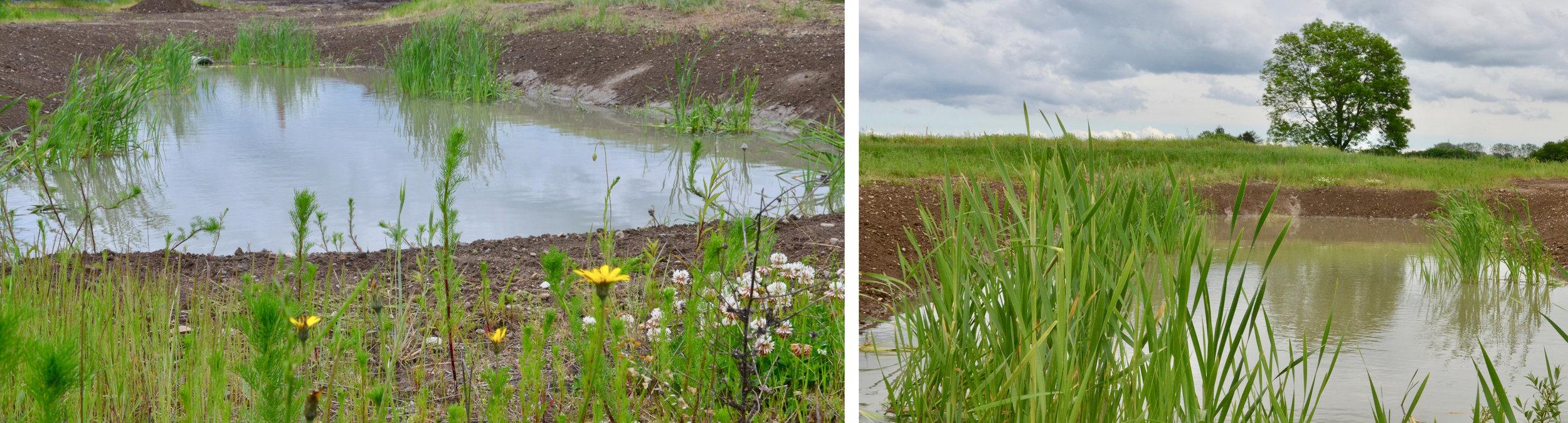 Det er planen, at de åbne regnvandsløb samles i forskellige søer i de grønne kiler. Foto: AOB