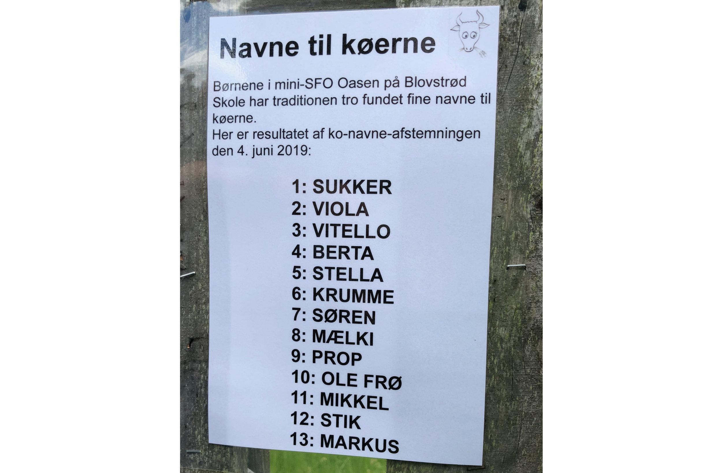 Børnene i mini-SFO Oasen på Blovstrød Skole har traditionen tro fundet fine navne til 13 af køerne. Foto: AOB