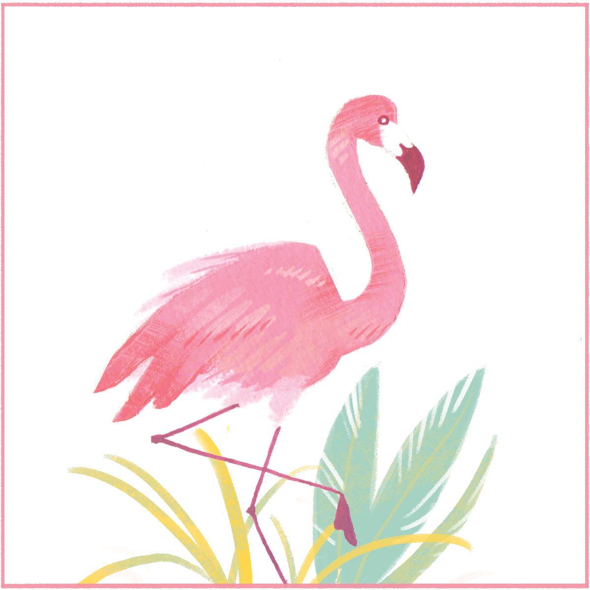 Flamingo crop rgb.jpg