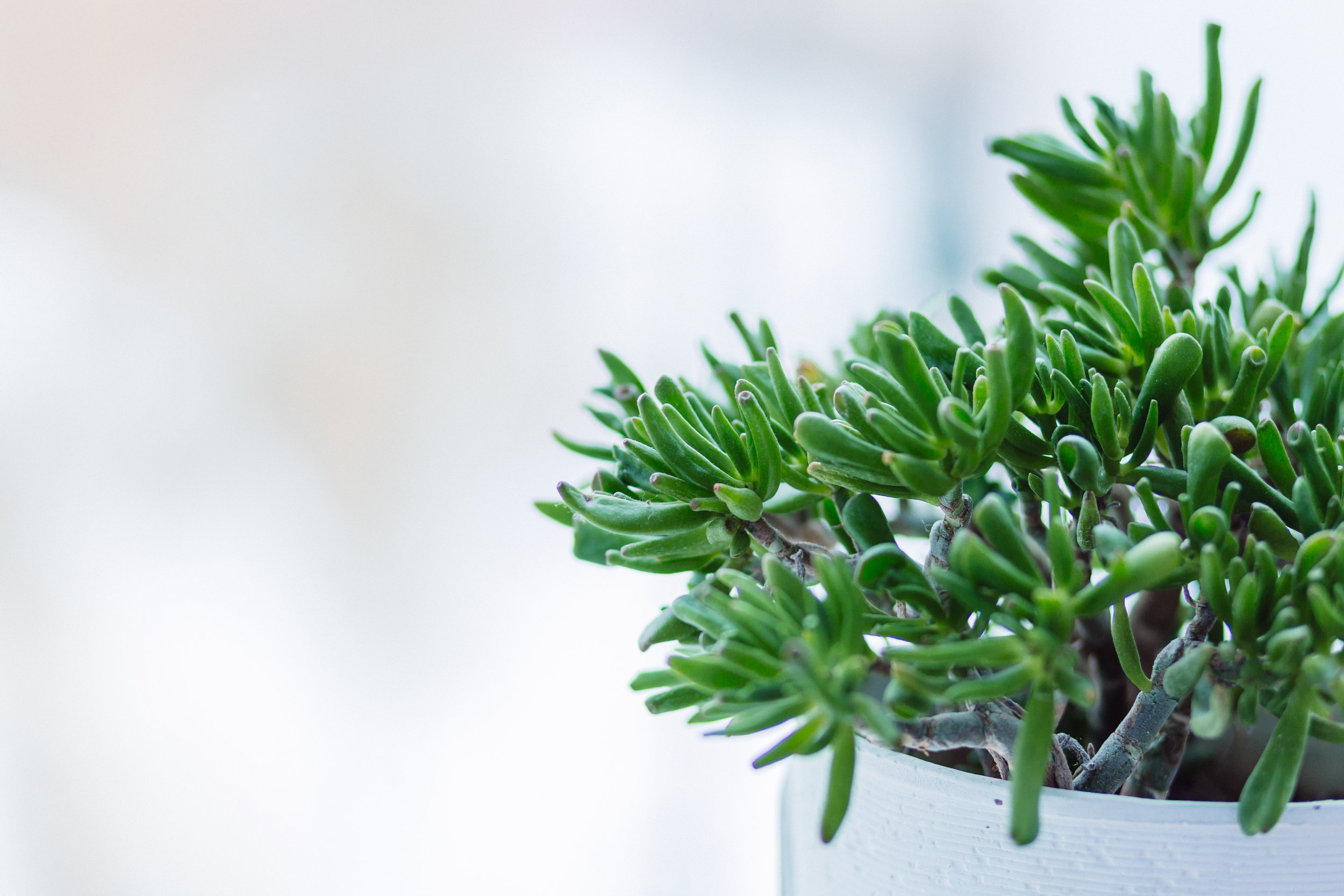 Choose to prune or grow your business this year