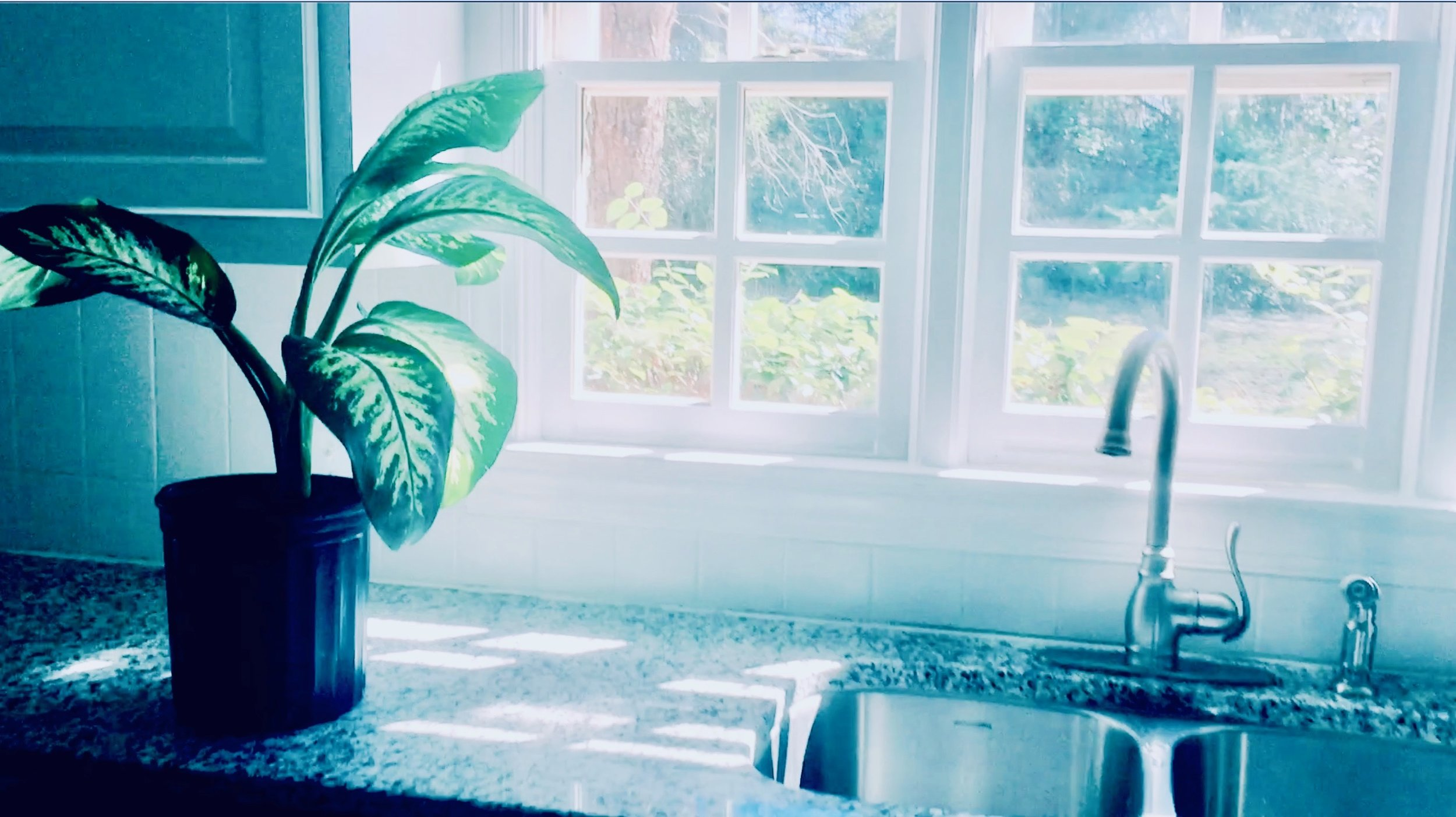 kitchen and plant light.jpeg