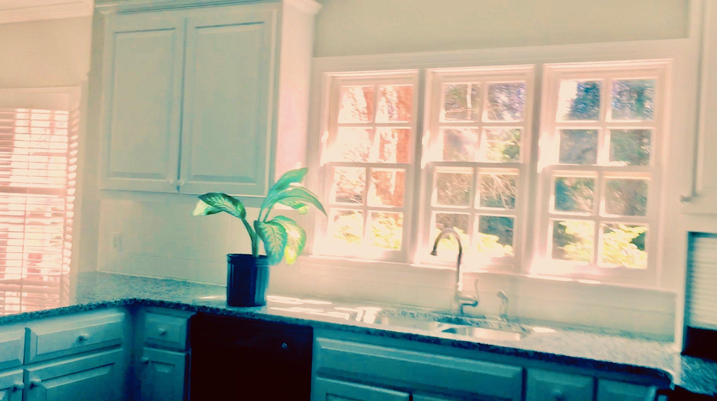 kitchen and plant.jpeg