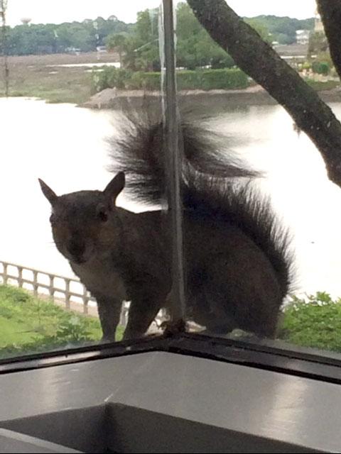 squirrel_web.jpg