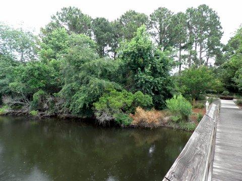 pond-park3.jpg