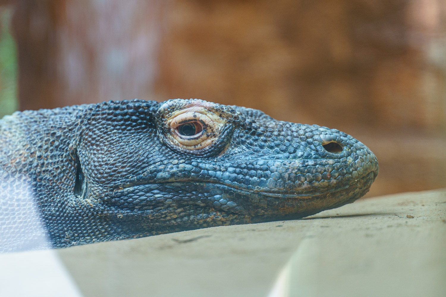 I often feel like this Komodo Dragon when I wake up in the morning.  75mm - 1/100 - f/2.8 - ISO 100