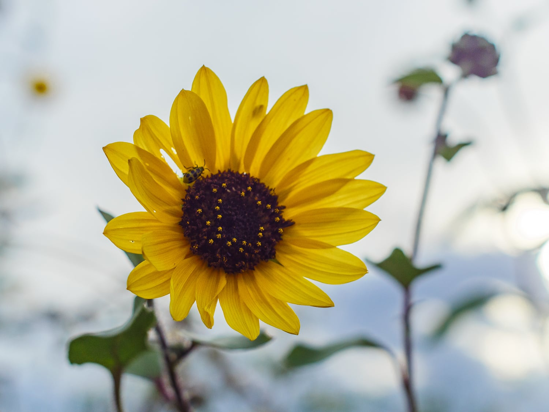 Yellow Flower, Yellow Bug