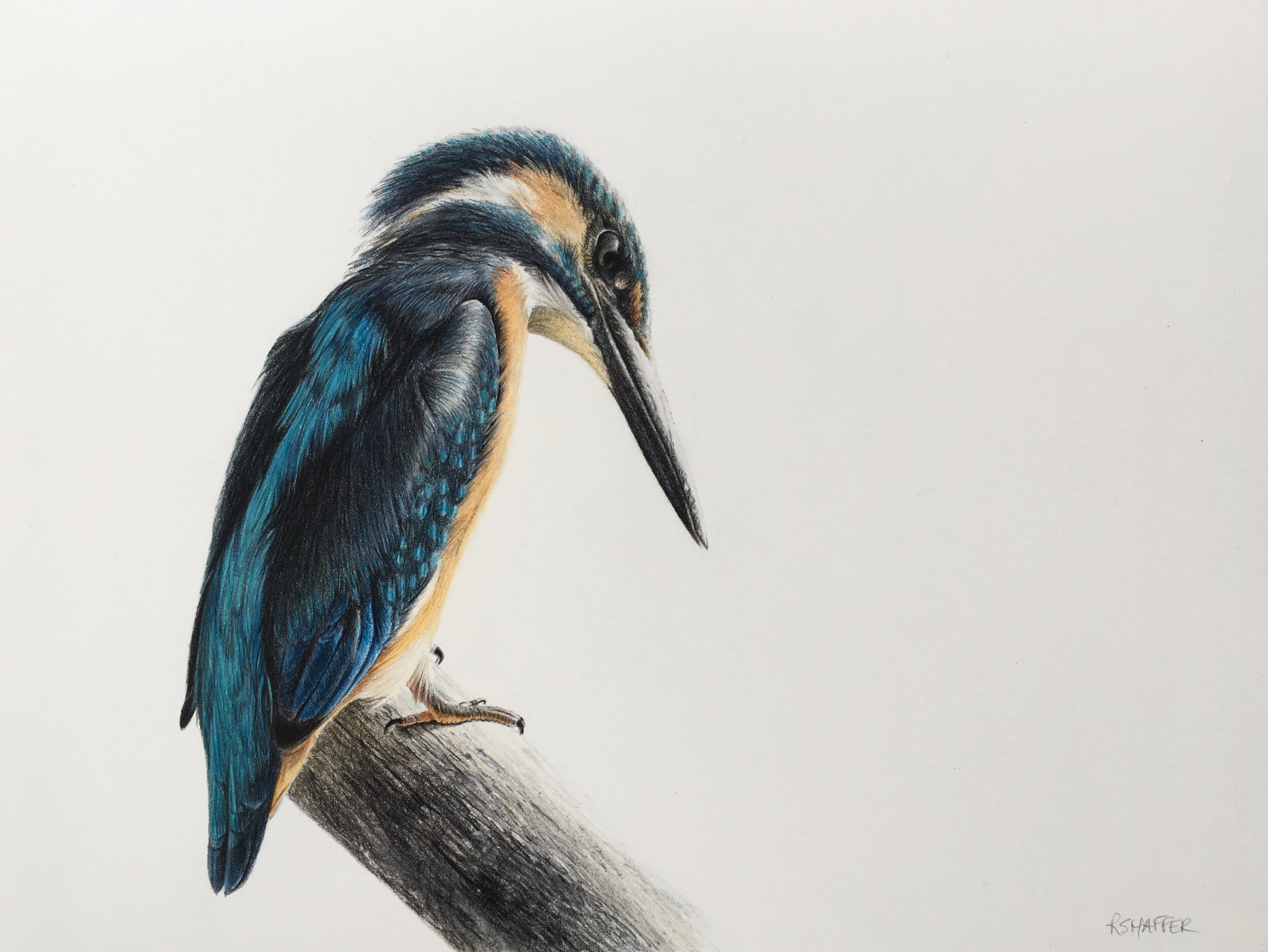 "Fisherking (Kingfisher), 9x12"", colored pencil on paper"