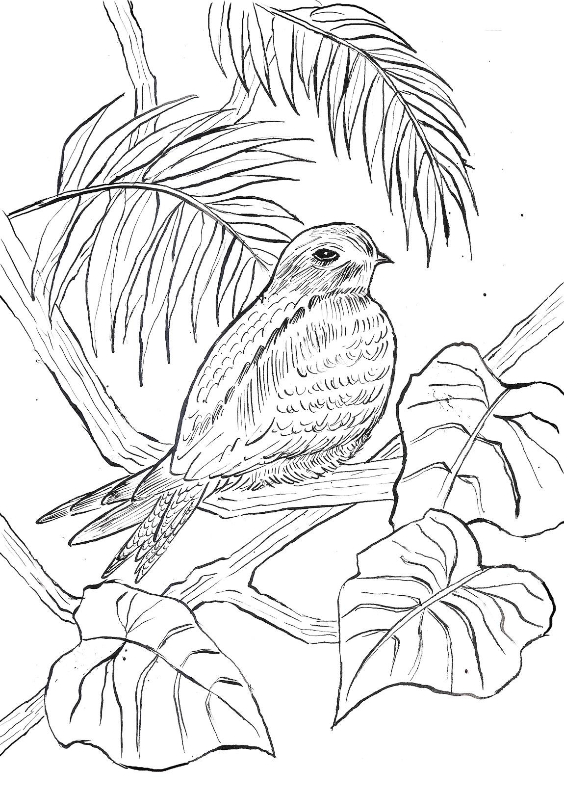 nighthawk-sketch.jpg