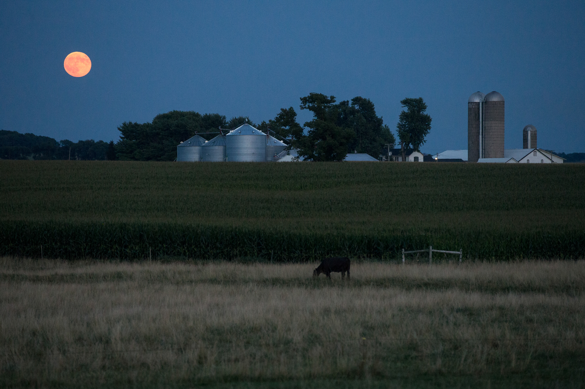 "A full moon rises on the horizon as cows graze in a field on Friday, July 27, 2018, at South Farwell Bridge Road in Pecatonica, Illinois. According to the Associated Press, Friday night marked a ""blood moon"" lunar eclipse that was visible at different times in Australia, Africa, Asia, Europe and South America when the sun, Earth and moon lined up perfectly, casting Earth's shadow on the moon. The total eclipse lasted 1 hour and 43 minutes, with the entire event lasting closer to four hours. North America missed out on the eclipse but can look forward to the next one on Jan. 21, 2019, according to NASA. [SCOTT P. YATES/RRSTAR.COM & THE JOURNAL-STANDARD STAFF]"