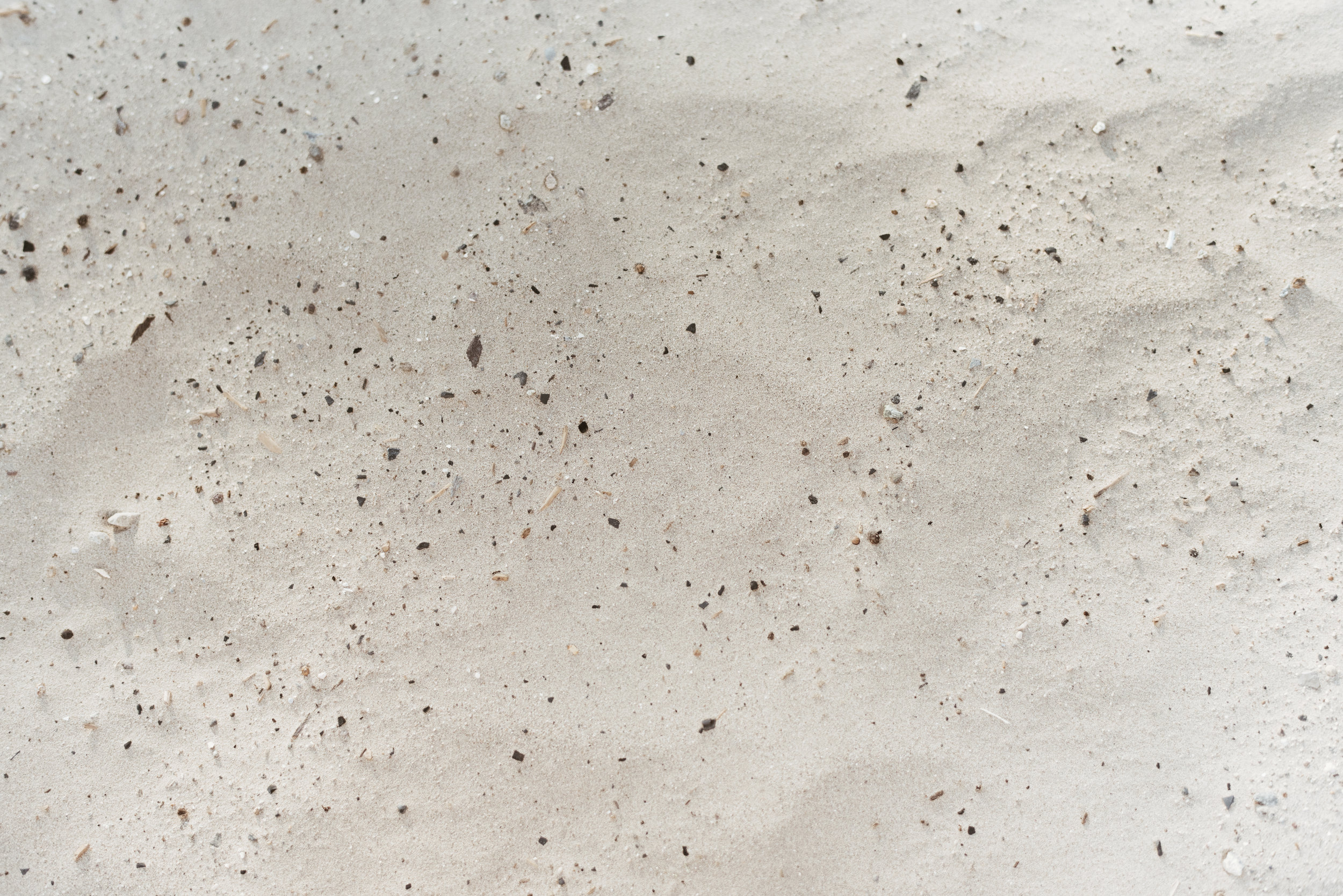 alyssasorenson-elm-1.jpg