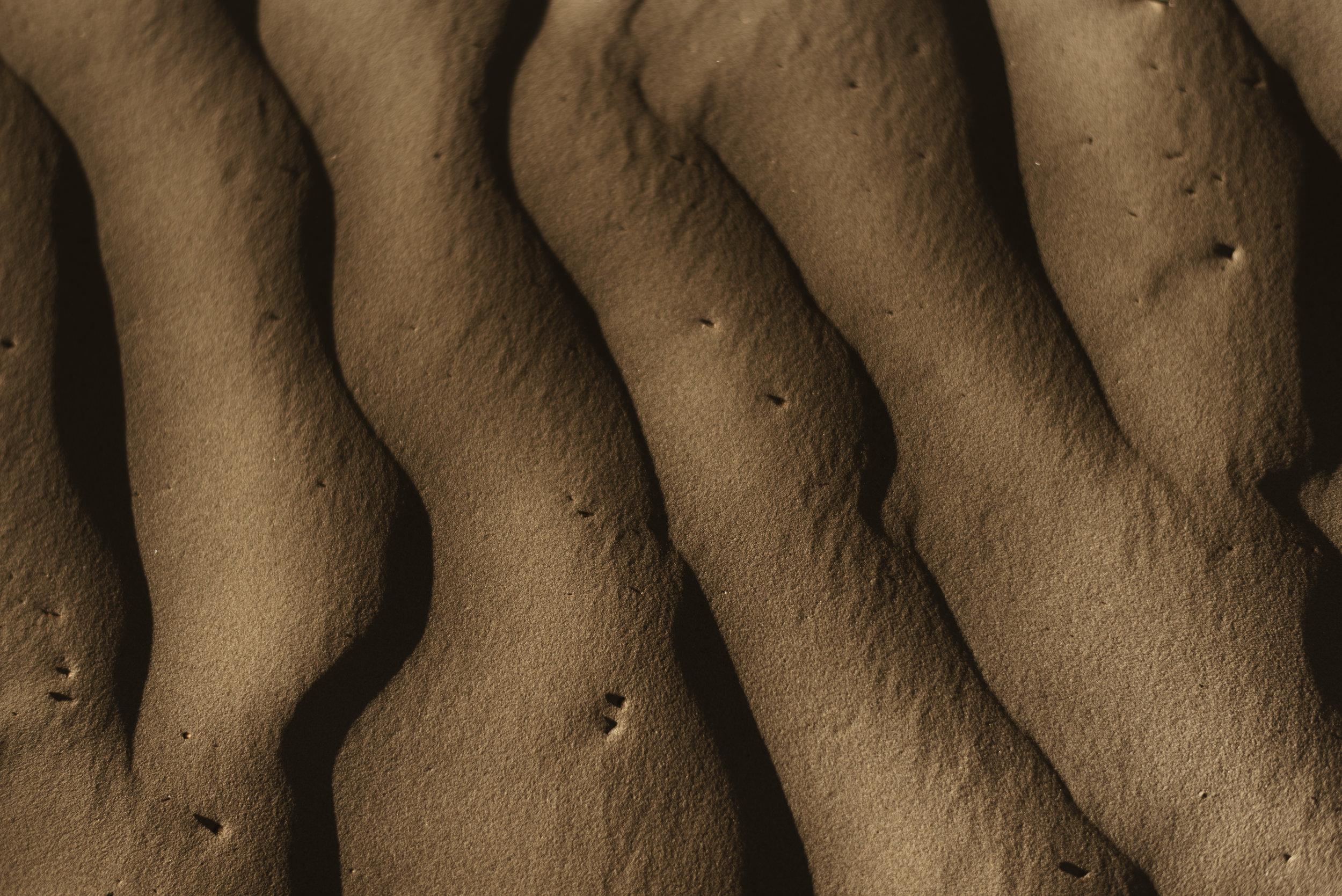 alyssasorenson-elm-8.jpg