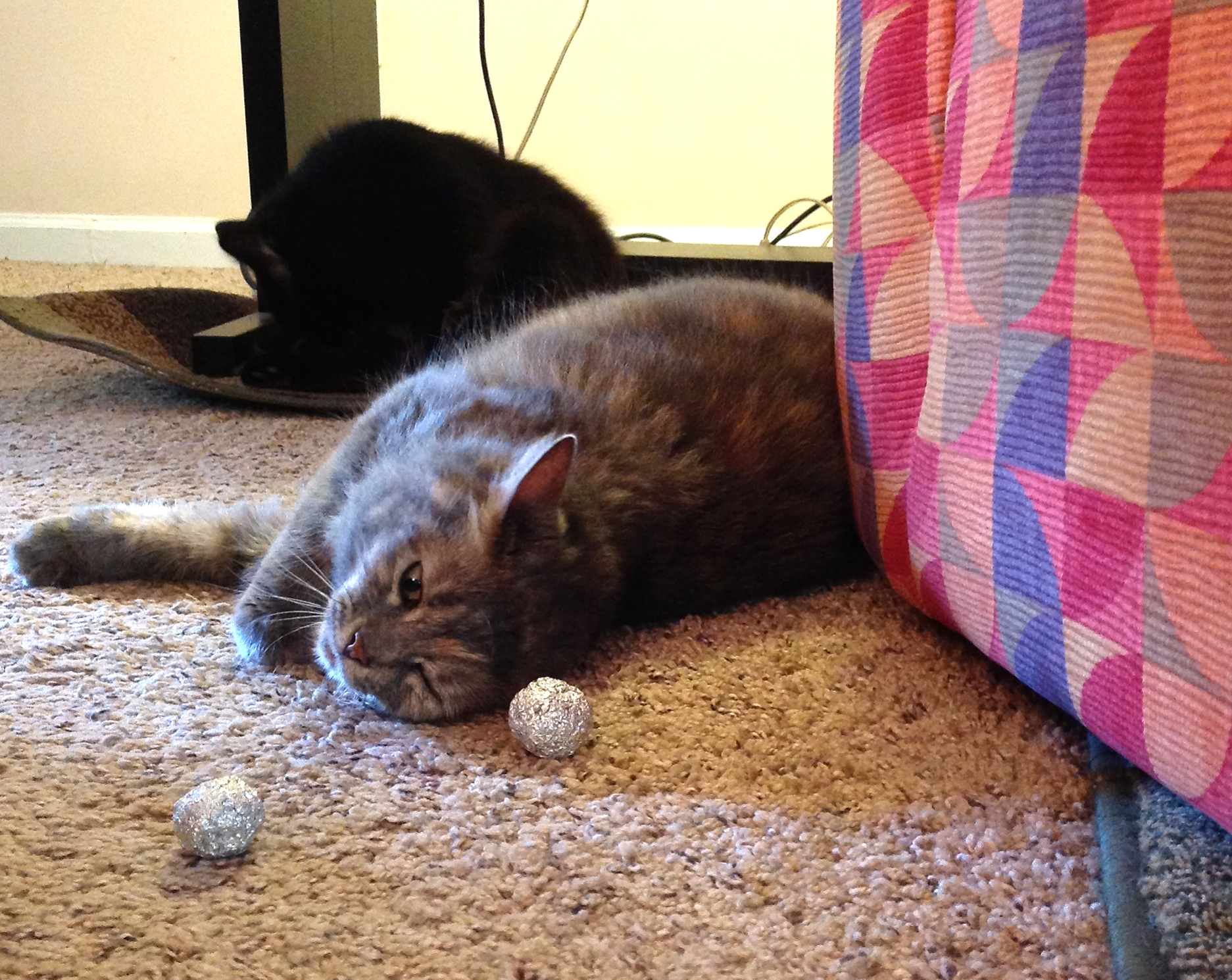 Tiny Ting loves foil balls. Her brother Samuel carries on.
