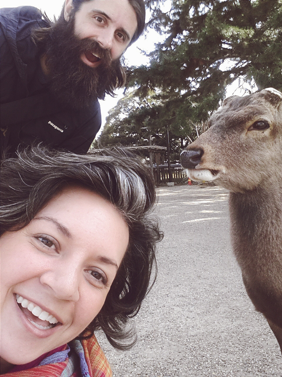 Took a daytrip to Nara Park to feed (and annoy) the Sika Deer  Cost: 150 yen / $1.50 for deer crackers